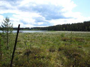 ecologisch herstel meren referentie Estland